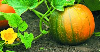 Pumpkin Pump House of Health Benefits