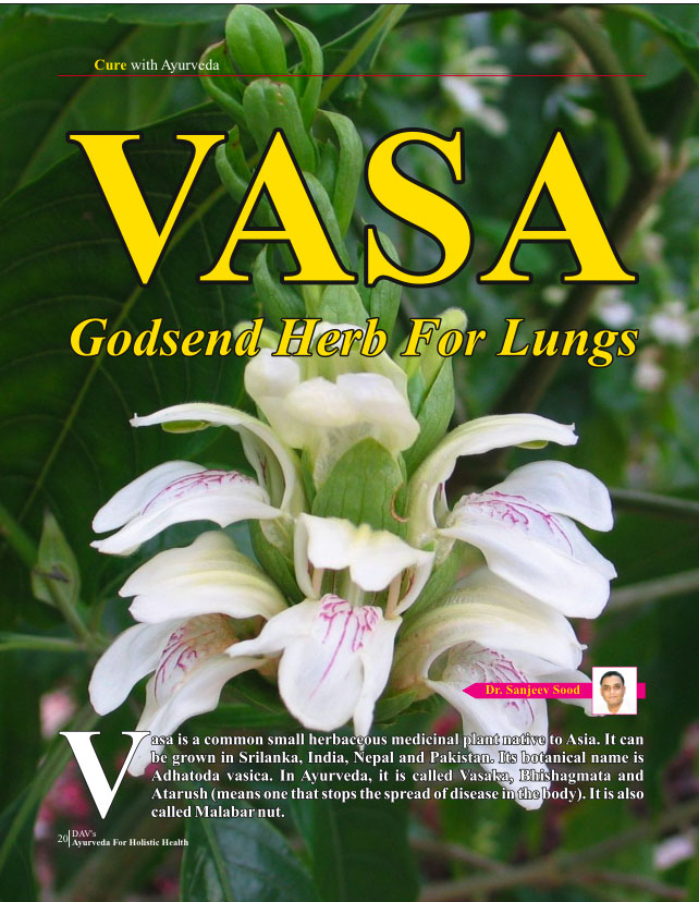 Vasa - Godsend Herb For Lungs